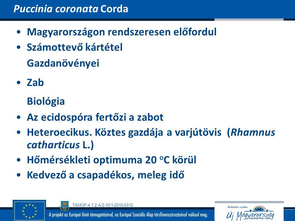 TÁMOP-4.1.2.A/2-10/1-2010-0012 Magyarországon rendszeresen előfordul Számottevő kártétel Gazdanövényei Zab Biológia Az ecidospóra fertőzi a zabot Hete