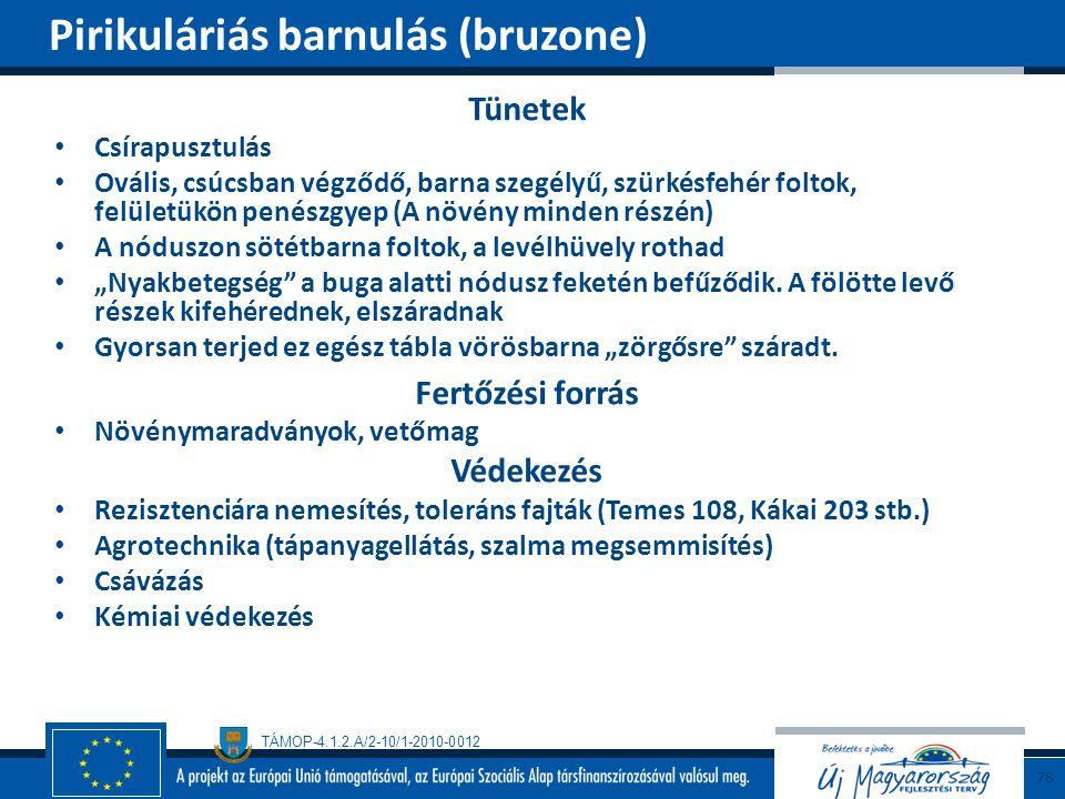 TÁMOP-4.1.2.A/2-10/1-2010-0012 Tünetek Csírapusztulás Ovális, csúcsban végződő, barna szegélyű, szürkésfehér foltok, felületükön penészgyep (A növény
