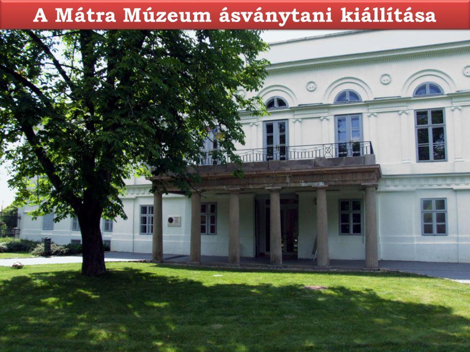 A Mátra Múzeum ásványtani kiállítása