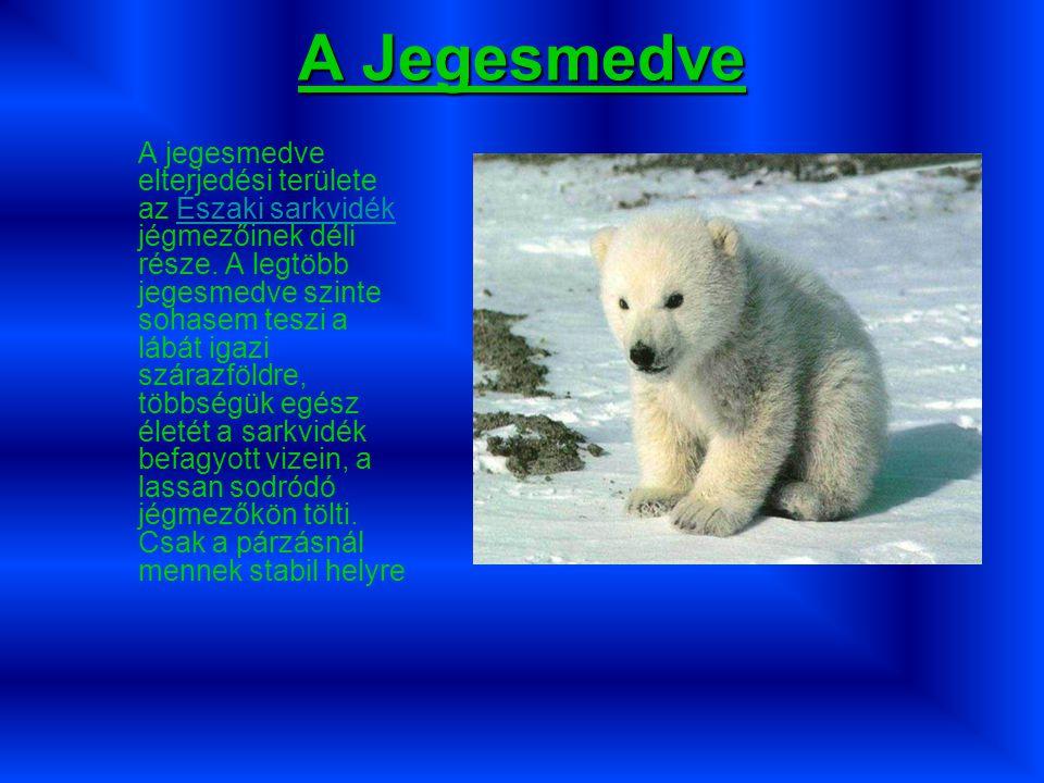 A Jegesmedve A jegesmedve elterjedési területe az Északi sarkvidék jégmezőinek déli része.