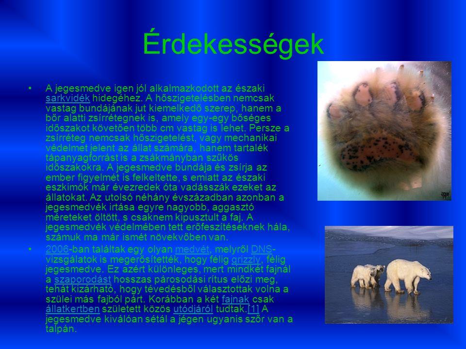 Érdekességek A jegesmedve igen jól alkalmazkodott az északi sarkvidék hidegéhez.