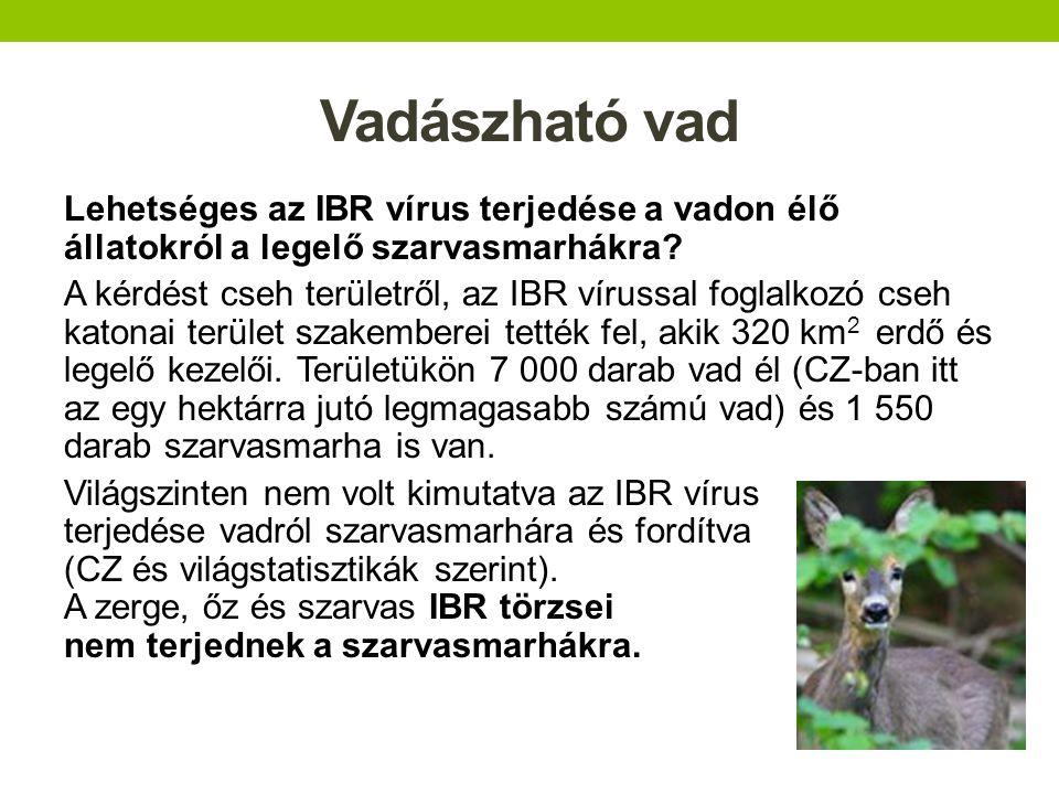 Vadászható vad Lehetséges az IBR vírus terjedése a vadon élő állatokról a legelő szarvasmarhákra? A kérdést cseh területről, az IBR vírussal foglalkoz
