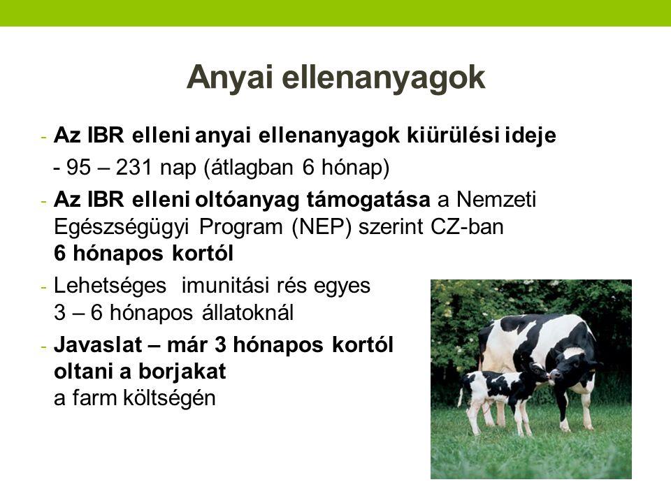Oltott üszők x nem oltott bikák egy azon farmon NEP – program kezdetén a tenyész bikák IBR elleni oltása nem volt szükséges ott, ahol az istállók technológiailag és üzemeltetésileg le voltak választva a farm többi istálóitól - Eset – tejhasznú farm 670 fejőstehénnel - az üszők és tehenek beoltva Bovilis IBR marker - a bikák cca 50 méter távolságban az üszők istállójától, nem voltak beoltva