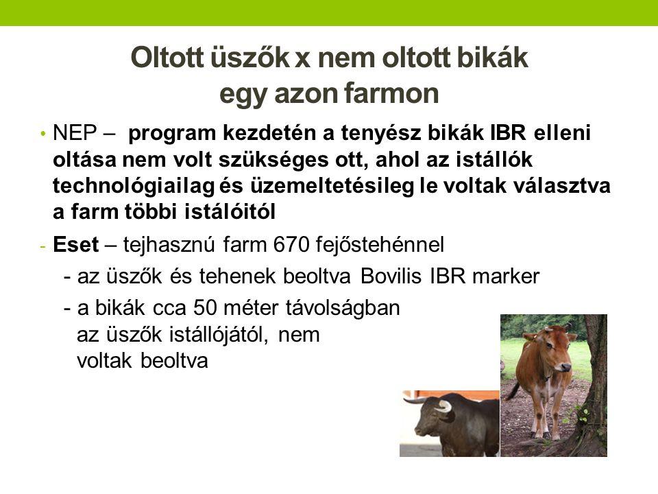 Oltott üszők x nem oltott bikák egy azon farmon NEP – program kezdetén a tenyész bikák IBR elleni oltása nem volt szükséges ott, ahol az istállók tech