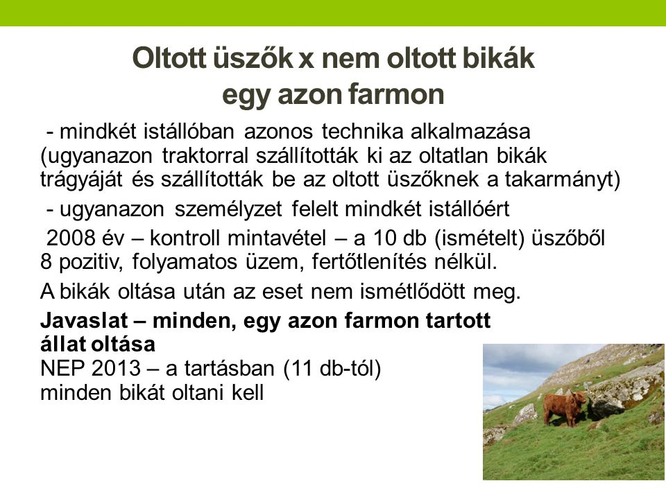 Oltott üszők x nem oltott bikák egy azon farmon - mindkét istállóban azonos technika alkalmazása (ugyanazon traktorral szállították ki az oltatlan bik