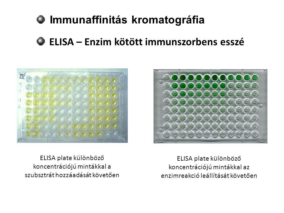 Immunaffinitás kromatográfia ELISA – Enzim kötött immunszorbens esszé ELISA plate különböző koncentrációjú mintákkal a szubsztrát hozzáadását követően