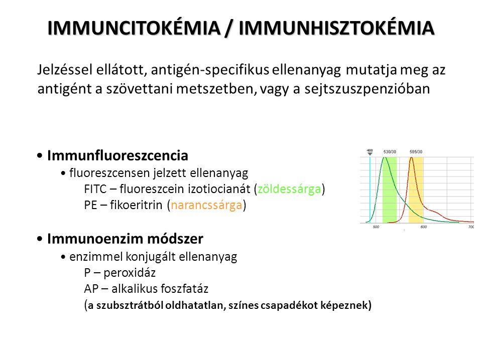 IMMUNCITOKÉMIA / IMMUNHISZTOKÉMIA Jelzéssel ellátott, antigén-specifikus ellenanyag mutatja meg az antigént a szövettani metszetben, vagy a sejtszuszp