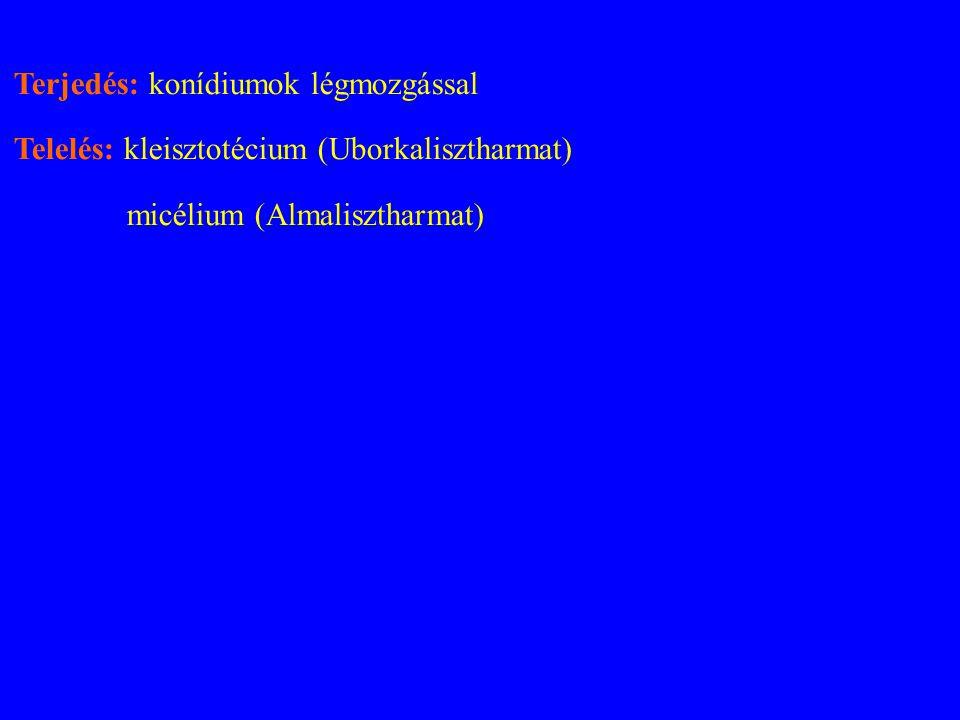 Terjedés: konídiumok légmozgással Telelés: kleisztotécium (Uborkalisztharmat) micélium (Almalisztharmat)