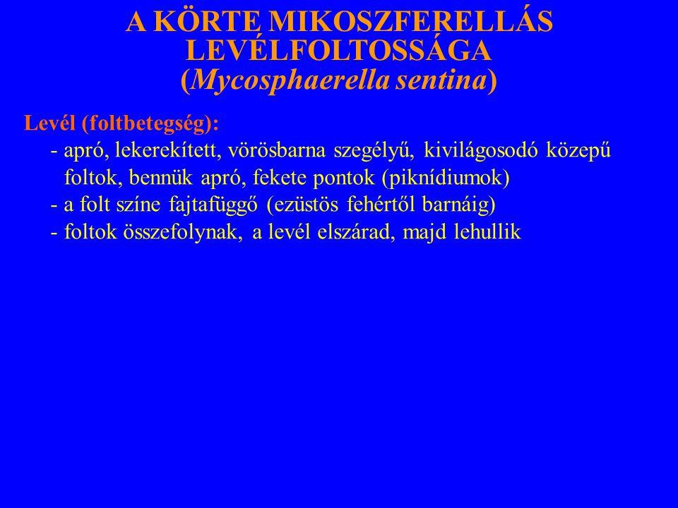 Levél (foltbetegség): - apró, lekerekített, vörösbarna szegélyű, kivilágosodó közepű foltok, bennük apró, fekete pontok (piknídiumok) - a folt színe fajtafüggő (ezüstös fehértől barnáig) - foltok összefolynak, a levél elszárad, majd lehullik A KÖRTE MIKOSZFERELLÁS LEVÉLFOLTOSSÁGA (Mycosphaerella sentina)