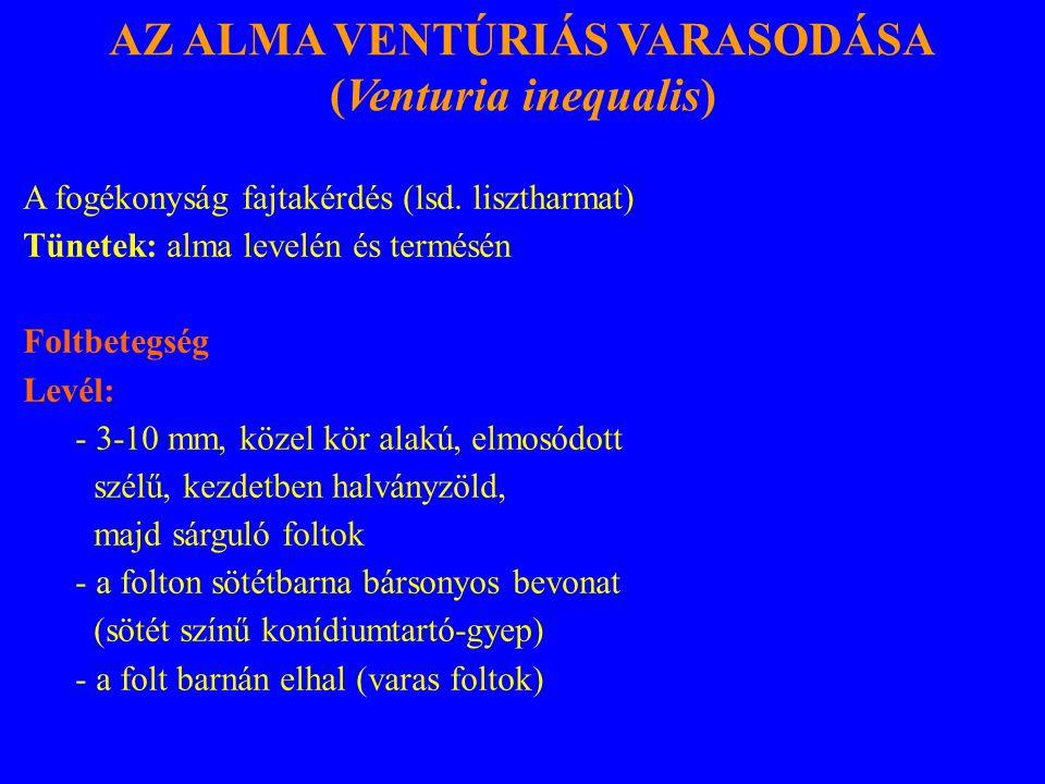 AZ ALMA VENTÚRIÁS VARASODÁSA (Venturia inequalis) A fogékonyság fajtakérdés (lsd.