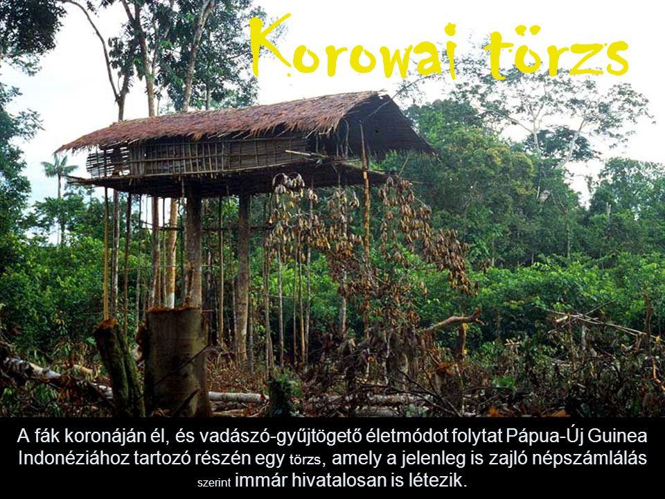 A fák koronáján él, és vadászó-gyűjtögető életmódot folytat Pápua-Új Guinea Indonéziához tartozó részén egy törzs, amely a jelenleg is zajló népszámlálás szerint immár hivatalosan is létezik.