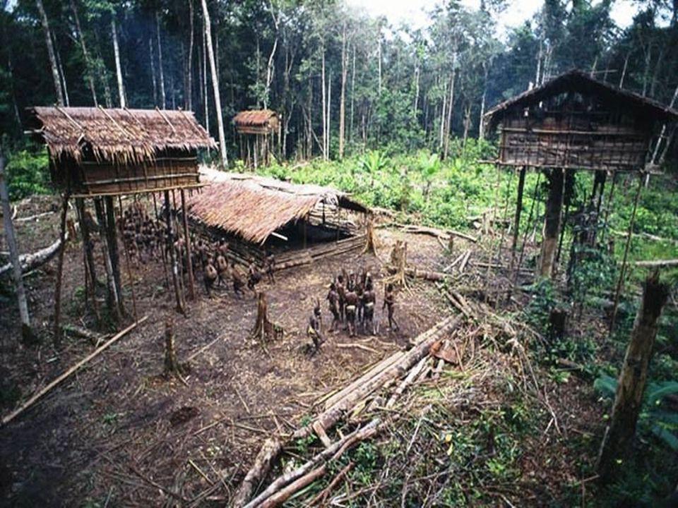 Az indonéz hatóságok bejelentették, hogy a kérdezőbiztosoknak sikerült eljutniuk a pápuai fennsík erdőségeibe, és megállapították, hogy a külvilágtól