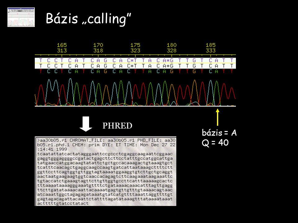 """Bázis """"calling"""" PHRED bázis = A Q = 40"""