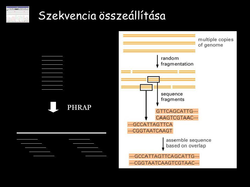 Szekvencia összeállítása PHRAP