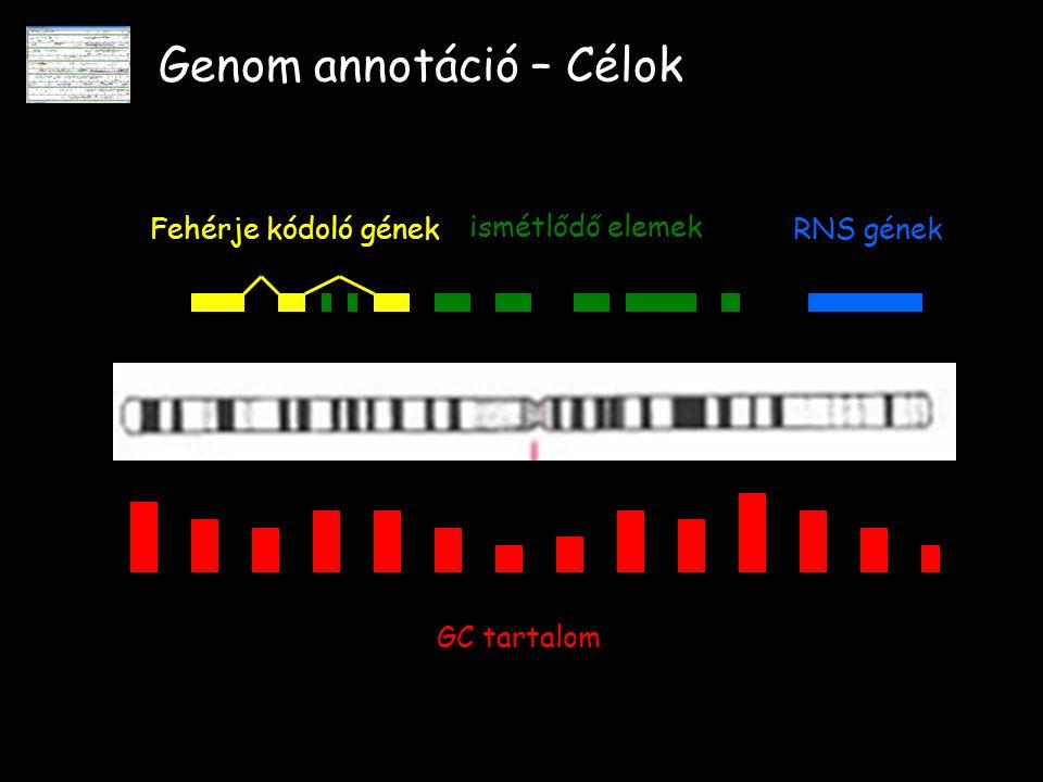 Genom annotáció – Célok Fehérje kódoló génekRNS gének ismétlődő elemek GC tartalom