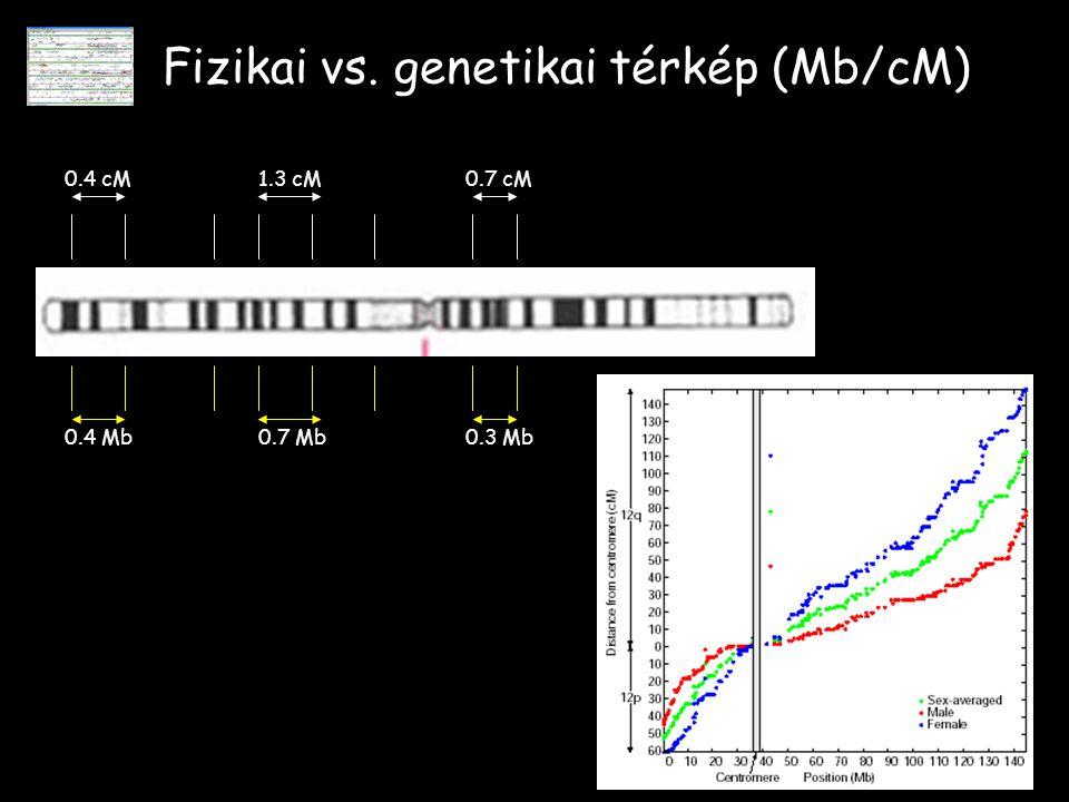 Fizikai vs. genetikai térkép (Mb/cM) 0.4 cM1.3 cM0.7 cM 0.4 Mb0.7 Mb0.3 Mb