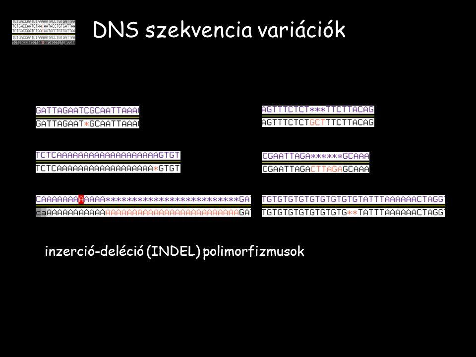 DNS szekvencia variációk inzerció-deléció (INDEL) polimorfizmusok