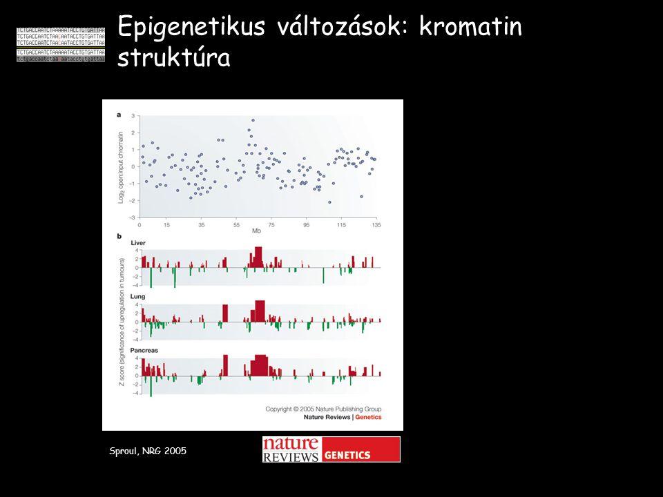 Epigenetikus változások: kromatin struktúra Sproul, NRG 2005
