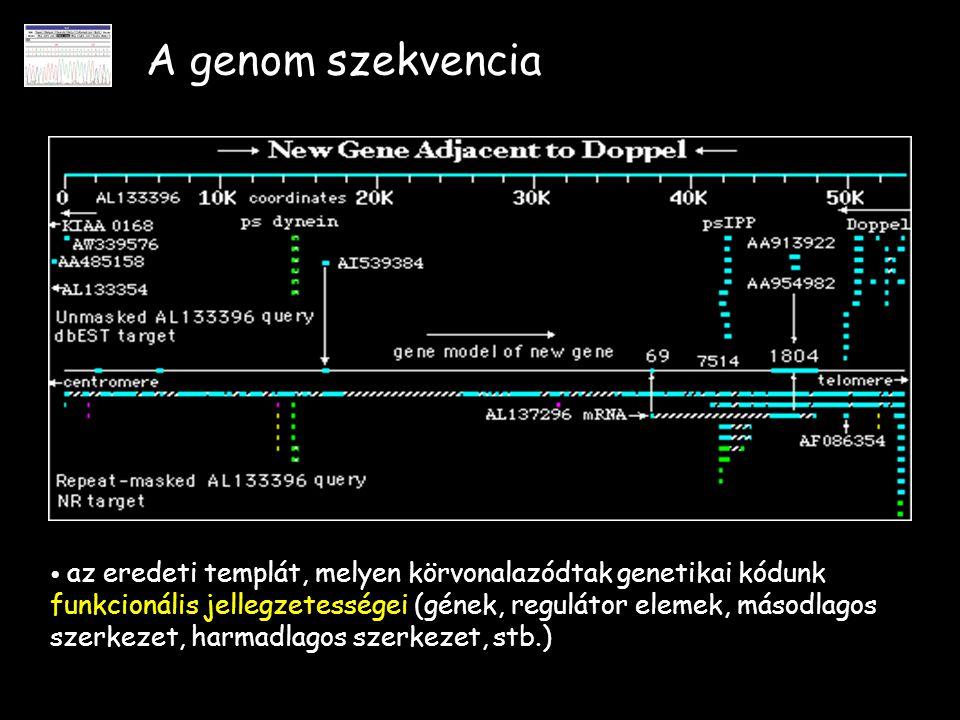 A genom szekvencia az eredeti templát, melyen körvonalazódtak genetikai kódunk funkcionális jellegzetességei (gének, regulátor elemek, másodlagos szer