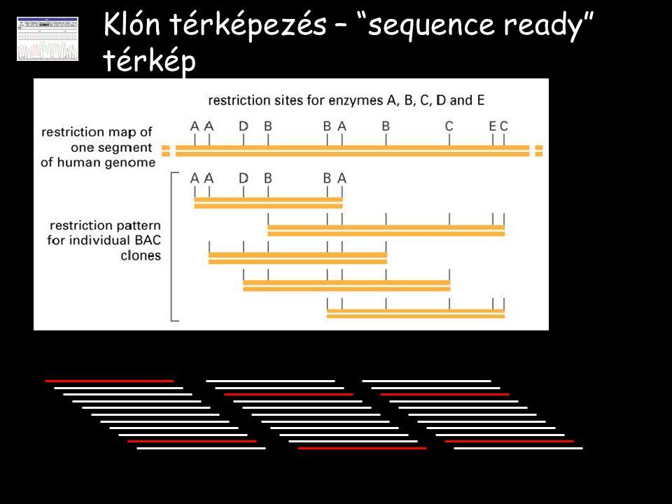 """Klón térképezés – """"sequence ready"""" térkép"""