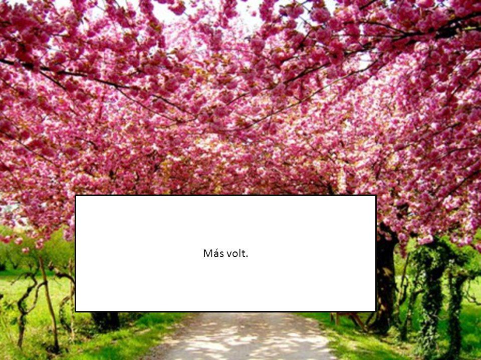 Délután éppen az erdőben sétáltam amikor…