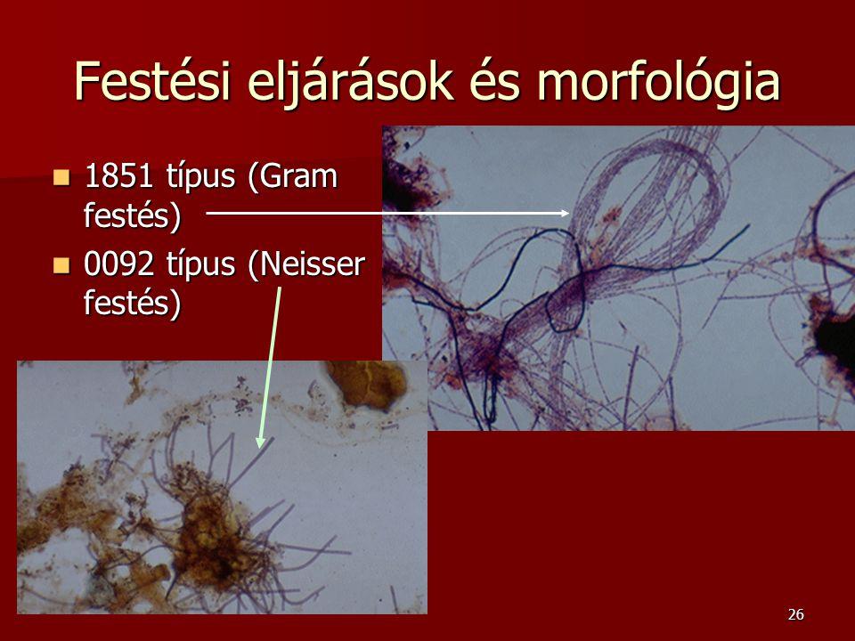 26 Festési eljárások és morfológia 1851 típus (Gram festés) 1851 típus (Gram festés) 0092 típus (Neisser festés) 0092 típus (Neisser festés)