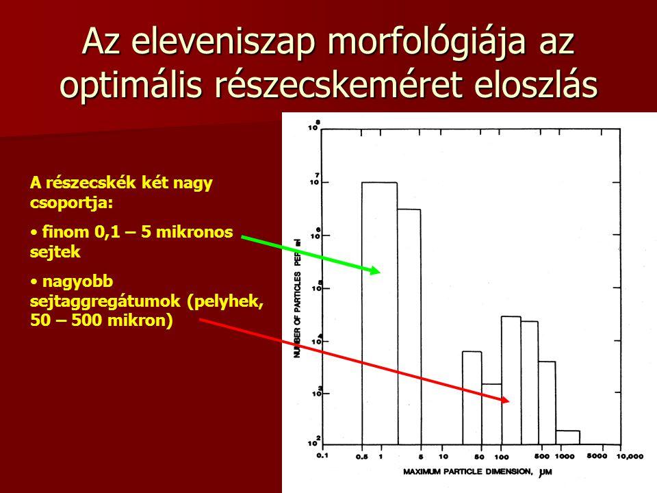 9 Az eleveniszap morfológiája az optimális részecskeméret eloszlás A részecskék két nagy csoportja: finom 0,1 – 5 mikronos sejtek nagyobb sejtaggregát