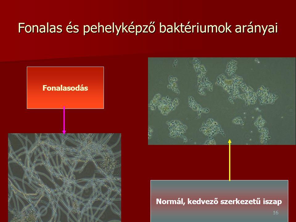 16 Fonalas és pehelyképző baktériumok arányai Fonalasodás Normál, kedvező szerkezetű iszap