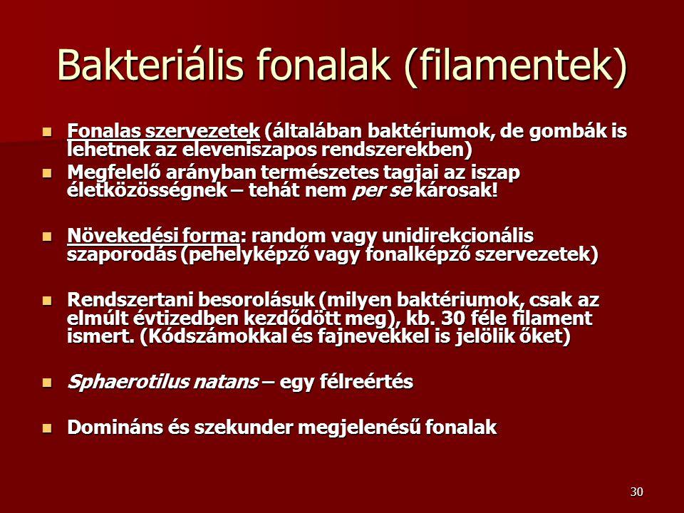 30 Bakteriális fonalak (filamentek) Fonalas szervezetek (általában baktériumok, de gombák is lehetnek az eleveniszapos rendszerekben) Fonalas szerveze