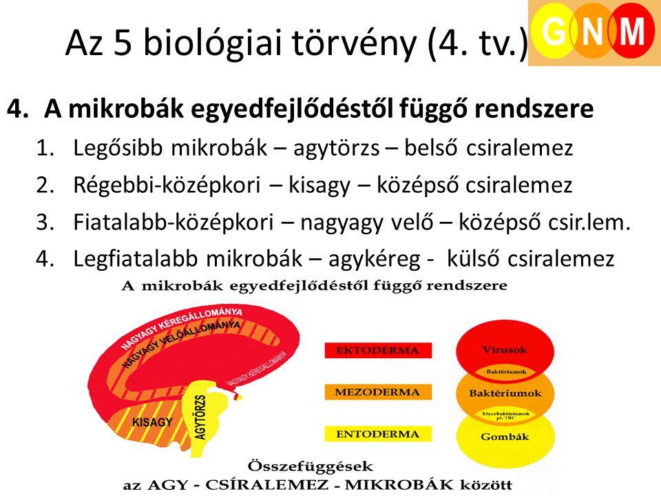 Az 5 biológiai törvény (4. tv.) 4.A mikrobák egyedfejlődéstől függő rendszere 1.Legősibb mikrobák – agytörzs – belső csiralemez 2.Régebbi-középkori –