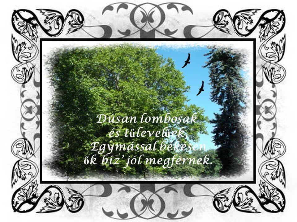 Árnyékos ligetben diszkrétek a fák, Ő rséget állanak, mint a katonák.
