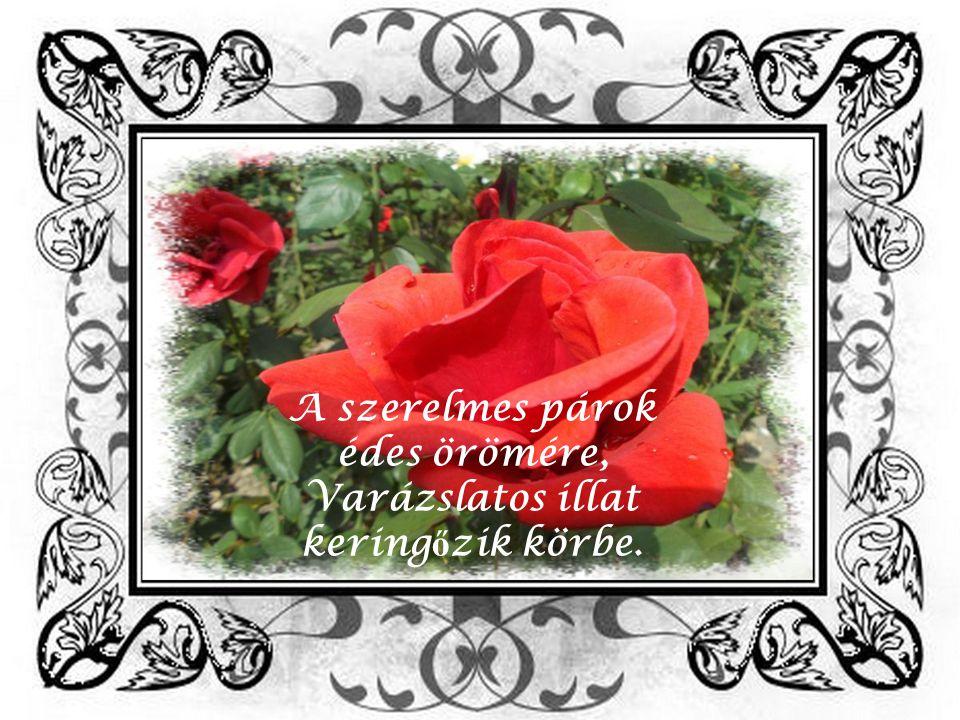 Korhadt kid ő lt fákat apróra vágtak, Helyükre illatos rózsákat plántáltak.