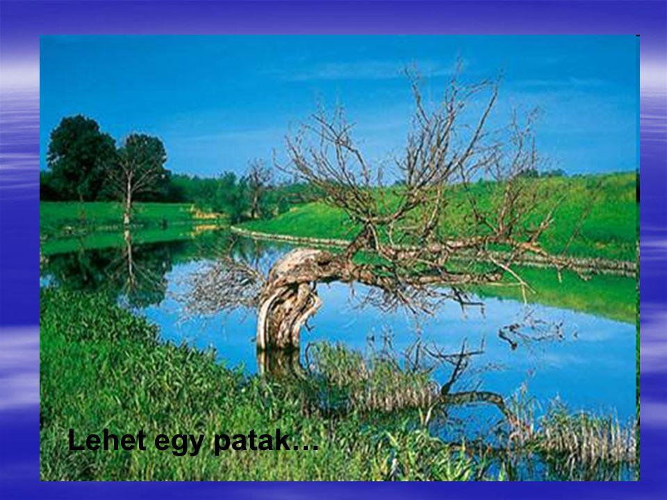 Lehet egy patak…