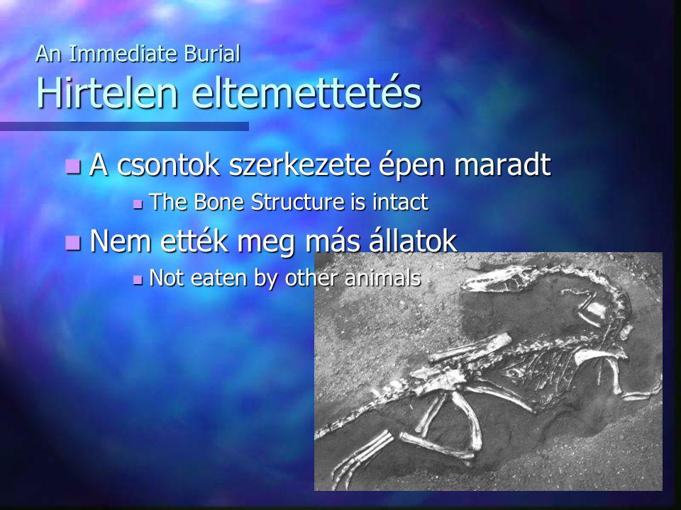 An Immediate Burial Hirtelen eltemettetés A csontok szerkezete épen maradt A csontok szerkezete épen maradt The Bone Structure is intact The Bone Structure is intact Nem ették meg más állatok Nem ették meg más állatok Not eaten by other animals Not eaten by other animals