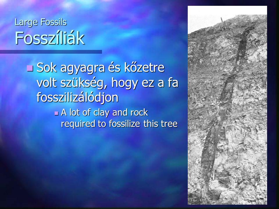 Large Fossils Fosszíliák Sok agyagra és kőzetre volt szükség, hogy ez a fa fosszilizálódjon Sok agyagra és kőzetre volt szükség, hogy ez a fa fosszili