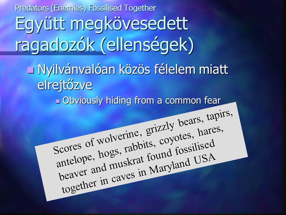 Predators (Enemies) Fossilised Together Együtt megkövesedett ragadozók (ellenségek) Nyilvánvalóan közös félelem miatt elrejtőzve Nyilvánvalóan közös f