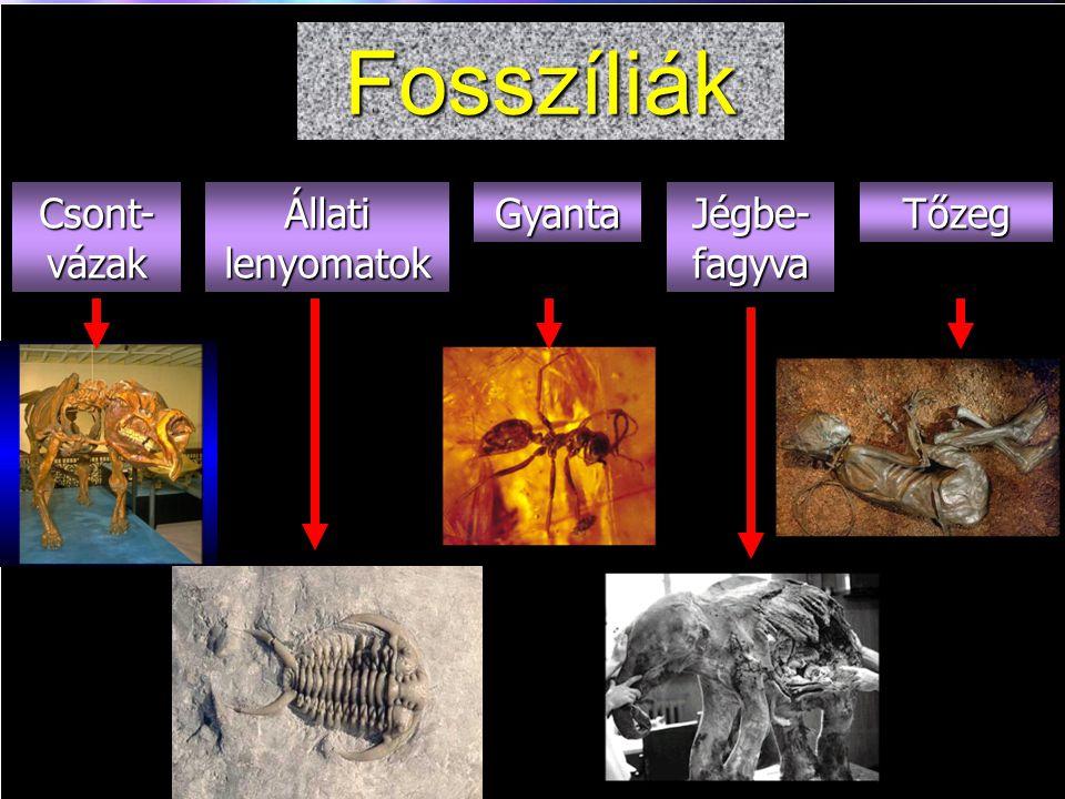 Fossil Types Fosszíliák Csont- vázak GyantaTőzeg Állati lenyomatok Jégbe-fagyva