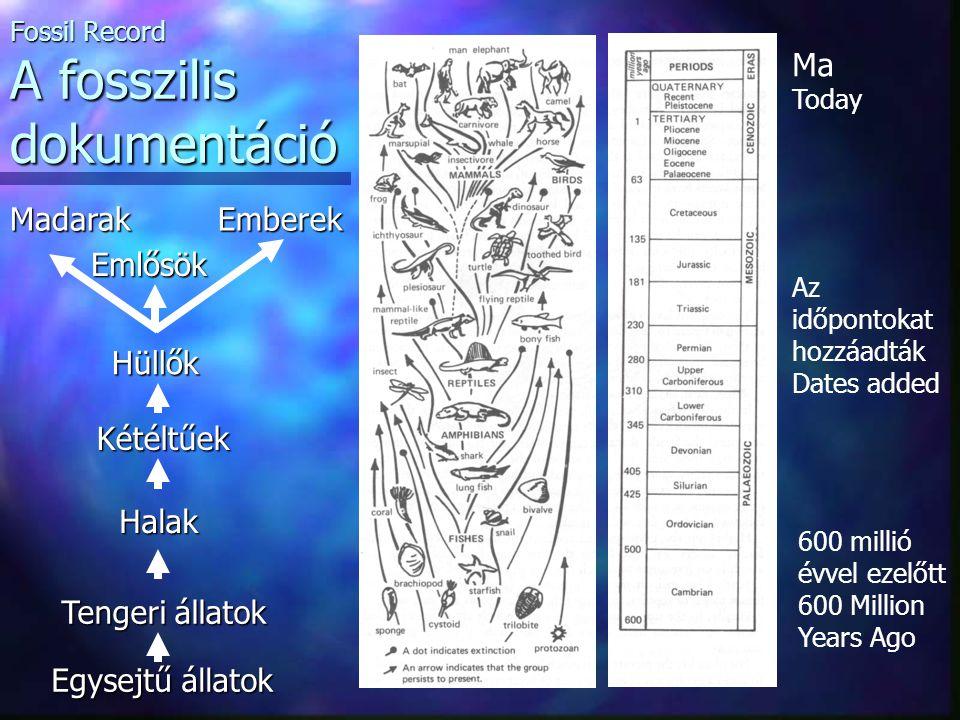 Az időpontokat hozzáadták Dates added Ma Today 600 millió évvel ezelőtt 600 Million Years Ago Fossil Record A fosszilis dokumentáció Egysejtű állatok Tengeri állatok Halak Kétéltűek Hüllők Madarak Emlősök Emberek