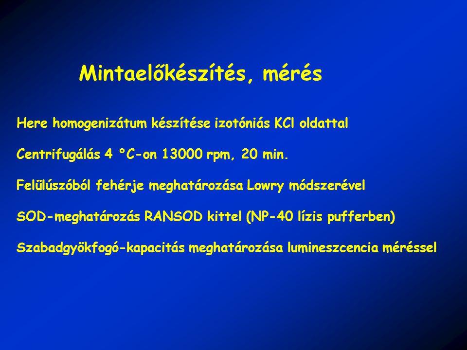 Here homogenizátum készítése izotóniás KCl oldattal Centrifugálás 4 °C-on 13000 rpm, 20 min.