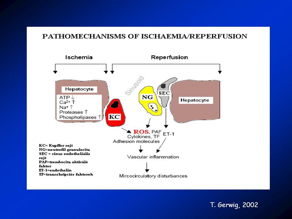 Célkitűzés Kutatásaink során arra voltunk kíváncsiak, hogy a máj-ischaemia/reperfúziós károsodások kivédésére alkalmazott antioxidáns vegyületek hogyan befolyásolják a here redox-homeosztázisát.