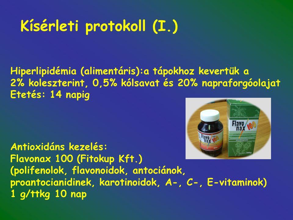 Kísérleti protokoll (I.) Hiperlipidémia (alimentáris):a tápokhoz kevertük a 2% koleszterint, 0,5% kólsavat és 20% napraforgóolajat Etetés: 14 napig Antioxidáns kezelés: Flavonax 100 (Fitokup Kft.) (polifenolok, flavonoidok, antociánok, proantocianidinek, karotinoidok, A-, C-, E-vitaminok) 1 g/ttkg 10 nap