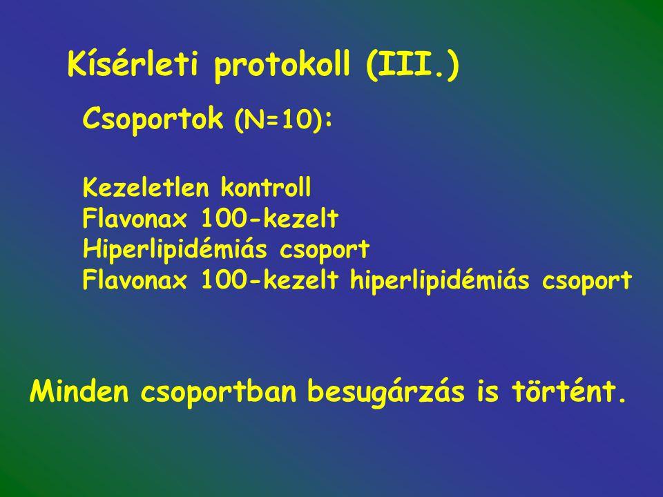 Kísérleti protokoll (III.) Csoportok (N=10) : Kezeletlen kontroll Flavonax 100-kezelt Hiperlipidémiás csoport Flavonax 100-kezelt hiperlipidémiás csoport Minden csoportban besugárzás is történt.