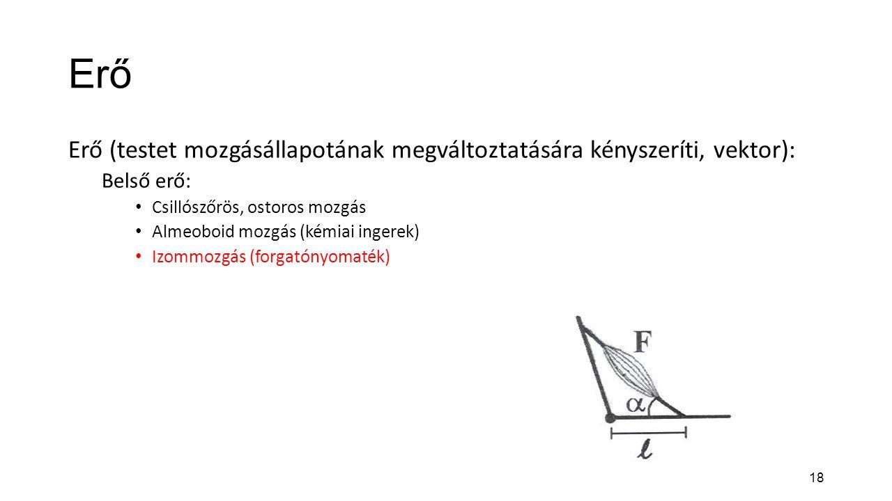 18 Erő Erő (testet mozgásállapotának megváltoztatására kényszeríti, vektor): Belső erő: Csillószőrös, ostoros mozgás Almeoboid mozgás (kémiai ingerek)