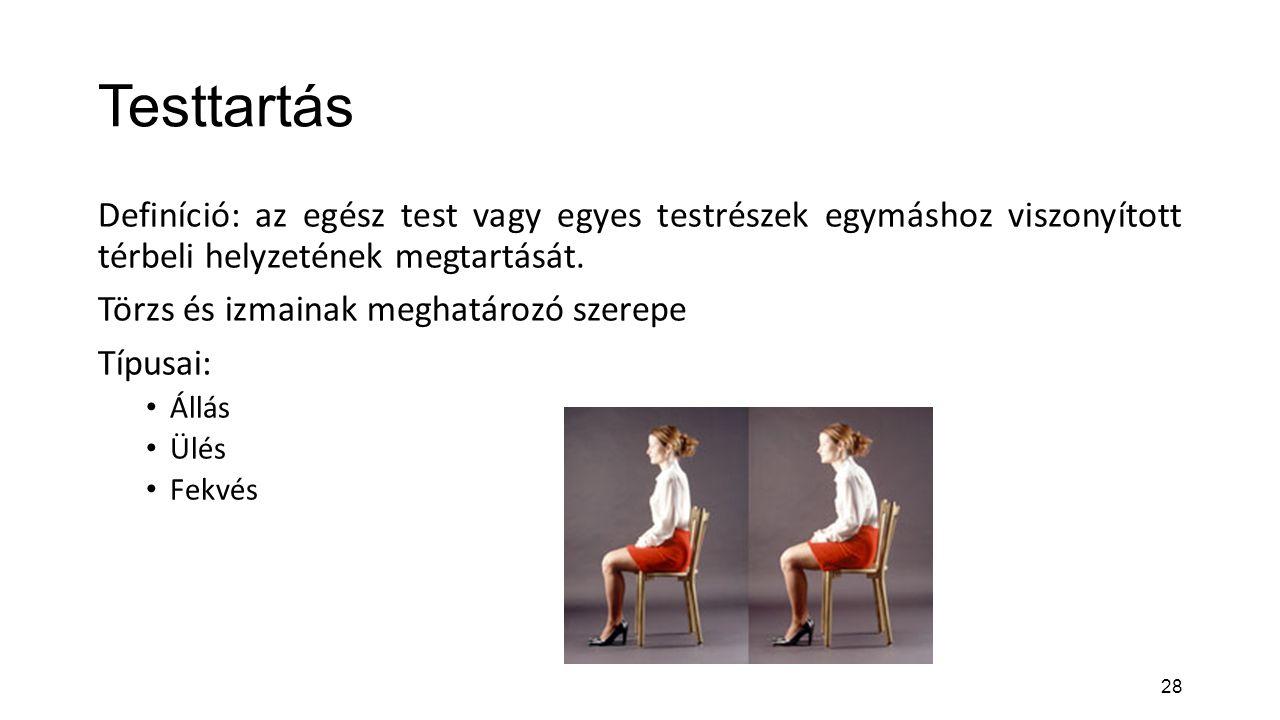28 Testtartás Definíció: az egész test vagy egyes testrészek egymáshoz viszonyított térbeli helyzetének megtartását. Törzs és izmainak meghatározó sze