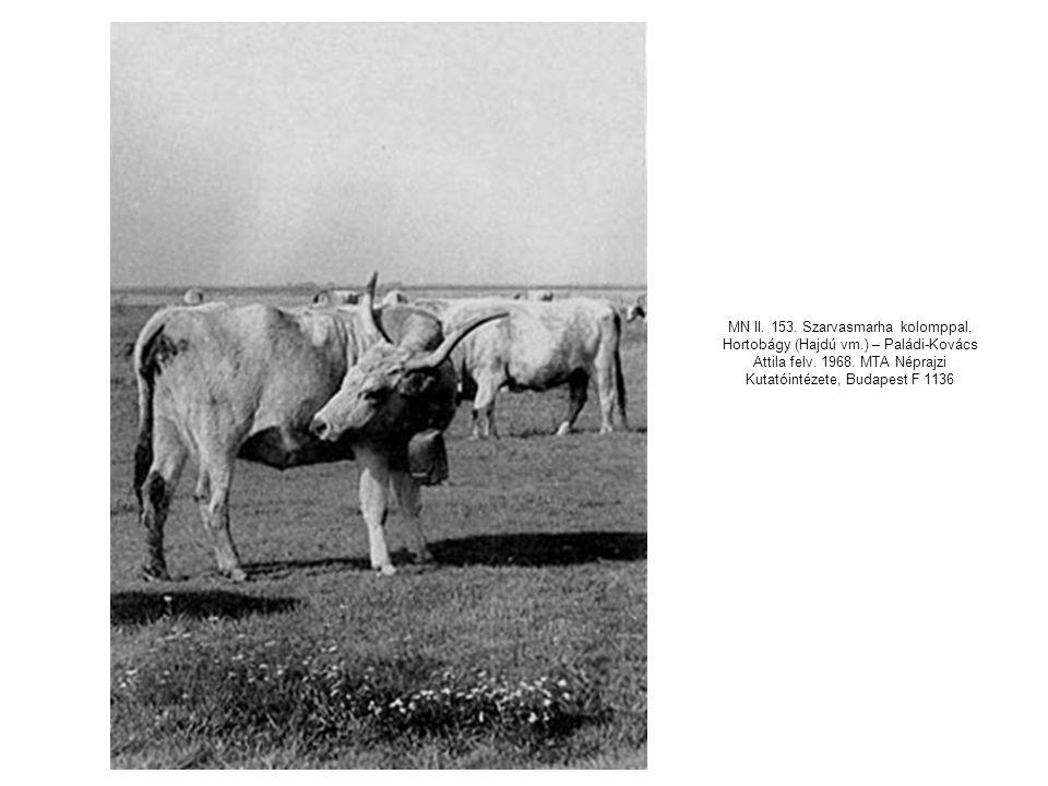 MN II. 153. Szarvasmarha kolomppal, Hortobágy (Hajdú vm.) – Paládi-Kovács Attila felv. 1968. MTA Néprajzi Kutatóintézete, Budapest F 1136