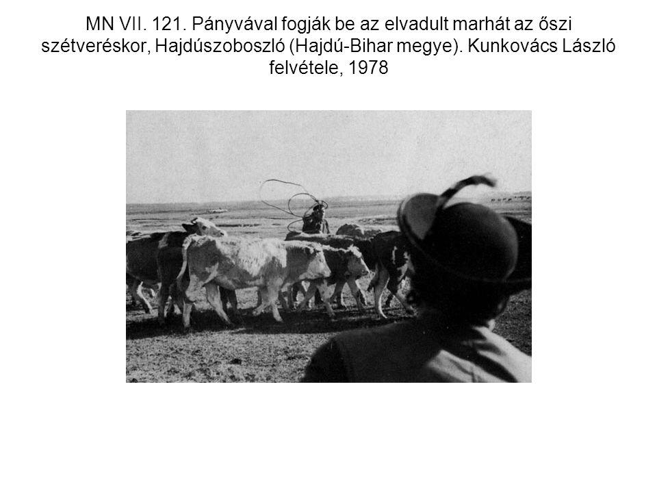 MN VII. 121. Pányvával fogják be az elvadult marhát az őszi szétveréskor, Hajdúszoboszló (Hajdú-Bihar megye). Kunkovács László felvétele, 1978