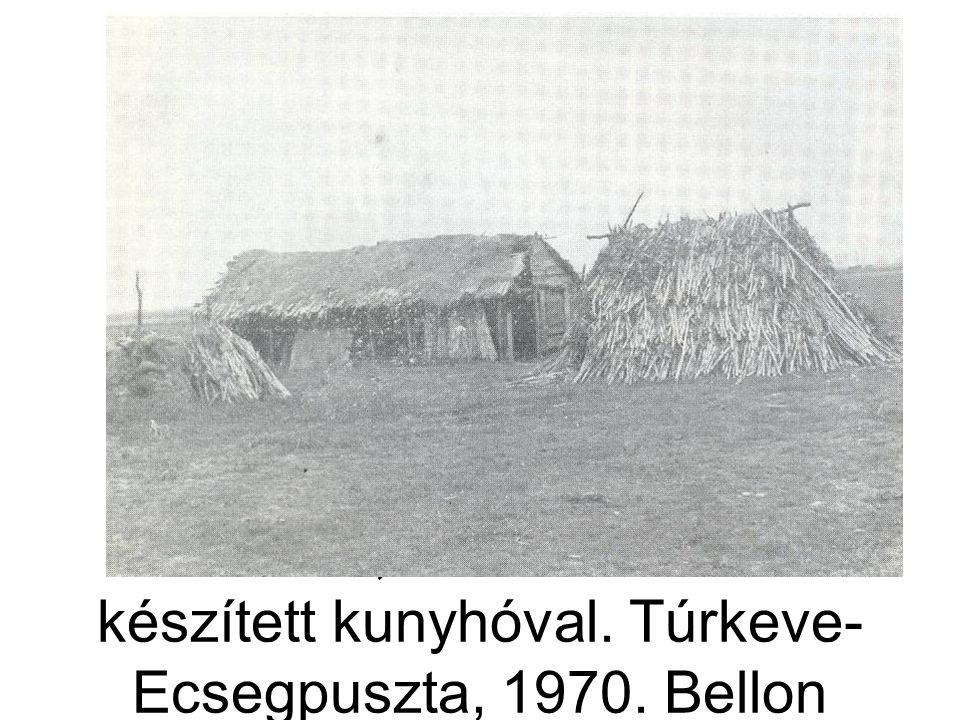 Juhakol, mellette ízikből készített kunyhóval. Túrkeve- Ecsegpuszta, 1970. Bellon T.1979: 112.