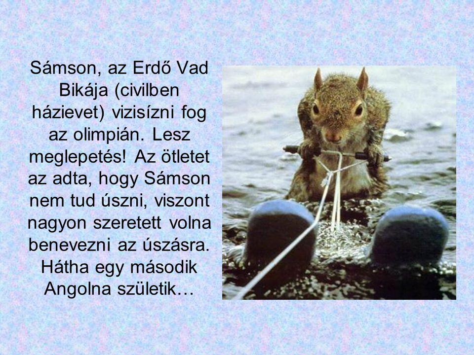 Sámson, az Erdő Vad Bikája (civilben házievet) vizisízni fog az olimpián.
