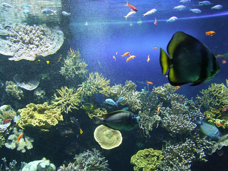 Az Oceanográfiai Múzeum, előtte Cousteau kapitány mélytengeri kutatóhajója