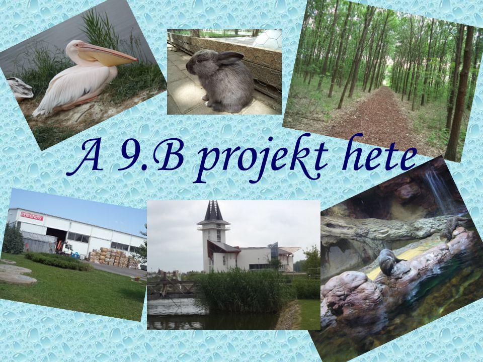 A 9.B projekt hete